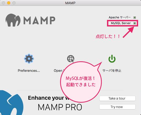 MySQLが動きました